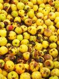 黄色生物苹果 免版税库存照片