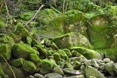 绿色生苔石头 免版税库存照片
