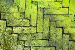 绿色生苔砖 免版税库存照片