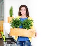 绿色生活 站立在现代顶楼办公室的可爱的年轻女实业家拿着有植物的一个箱子 环境 库存图片