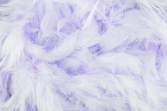 紫色用羽毛装饰背景 免版税库存照片