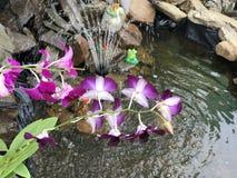 紫色用花装饰 免版税库存图片