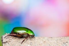 绿色甲虫 免版税图库摄影