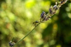 绿色甲虫 免版税库存照片