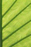 绿色留下半细节 库存照片
