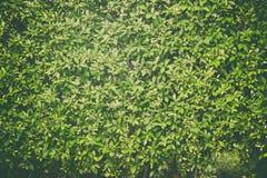 绿色留下墙壁背景,在墙壁上的植物,葡萄酒口气 免版税库存照片
