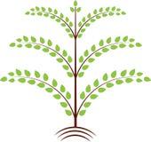 绿色留下树例证 免版税库存图片