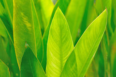 绿色留下纹理背景 免版税库存照片