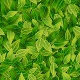 绿色留下背景, eco,有机,无缝的样式, 免版税库存照片