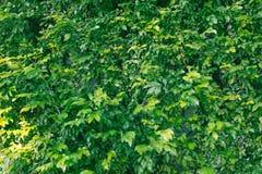 绿色留下背景 库存照片