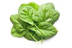 绿色留下菠菜 免版税库存照片