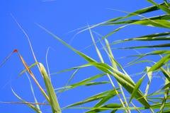 绿色留下蓝天背景 库存照片