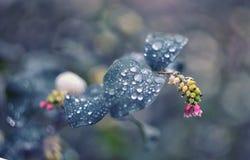 绿色留下雨珠 背景蓝色云彩调遣草绿色本质天空空白小束 在绿色叶子的下落 接近的下落 库存图片