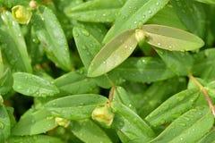 绿色留下雨 免版税库存照片