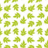 绿色留给模式无缝 与新鲜的叶子的传染媒介纹理 库存例证