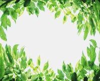 绿色留给背景白色拷贝空间,在白色背景 库存照片