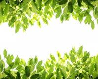 绿色留给背景白色拷贝空间,在白色背景 免版税库存照片