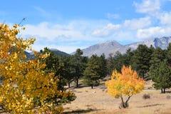 黄色白杨木在洛矶山国家公园 免版税库存照片