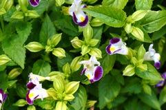 紫色白花在庭院里 免版税库存照片