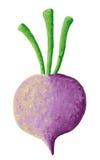 紫色白萝卜 库存图片