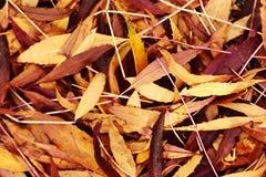 色的下落的叶子地板  免版税库存图片