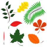色的不同的叶子 免版税库存图片