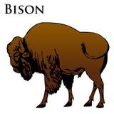 色的北美野牛例证 免版税库存图片