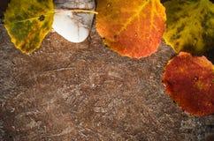 色的叶子秋天看板卡  库存图片