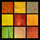 色的叶子马赛克九静脉 库存照片