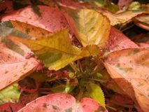 色的叶子 免版税库存图片