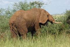 色的地球大象 免版税库存照片