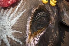 色的大象头 库存图片