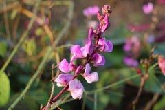 紫色的奥秘 图库摄影