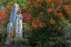 色的寿命仍然向结构树扔石头 图库摄影