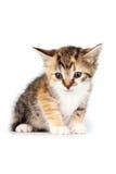 色的小猫多小 免版税库存照片