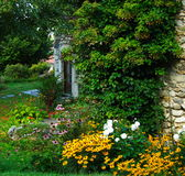 色的庭院绿色 库存图片