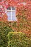 色的房子留下藤墙壁通配 免版税库存图片