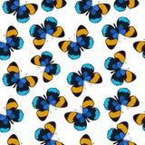 色的无缝的样式蝴蝶 图库摄影