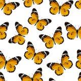 色的无缝的样式蝴蝶 免版税库存图片
