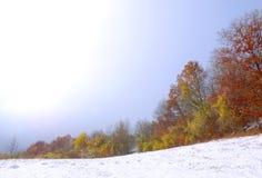 色的树第一雪 免版税库存照片