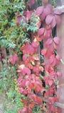 绿色的树红色和 免版税库存图片