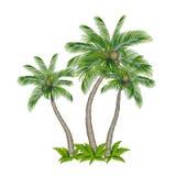 色的棕榈树 库存图片