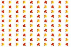 色的槭树叶子背景  免版税库存照片