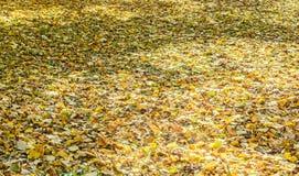 色的橙黄叶子,秋天时间在室外公园 库存图片