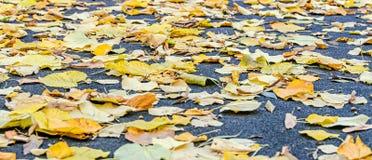 色的橙黄叶子,秋天时间在室外公园 免版税库存图片