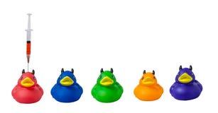 色的橡胶duckies显示他们怎么得到他们的颜色 库存照片