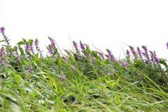 色的淡紫色 库存照片