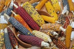 色的玉米棒子 库存照片