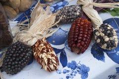 色的玉米棒 免版税库存照片