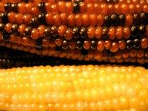 色的玉米 免版税库存图片